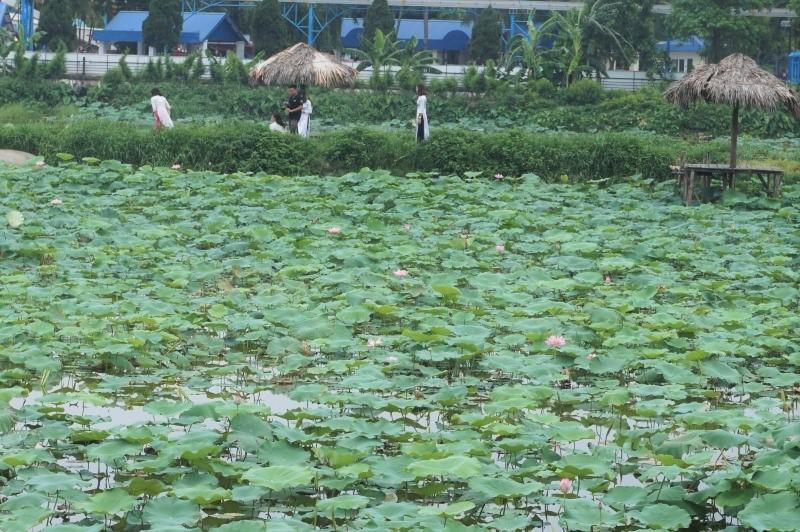 タイ湖撮影