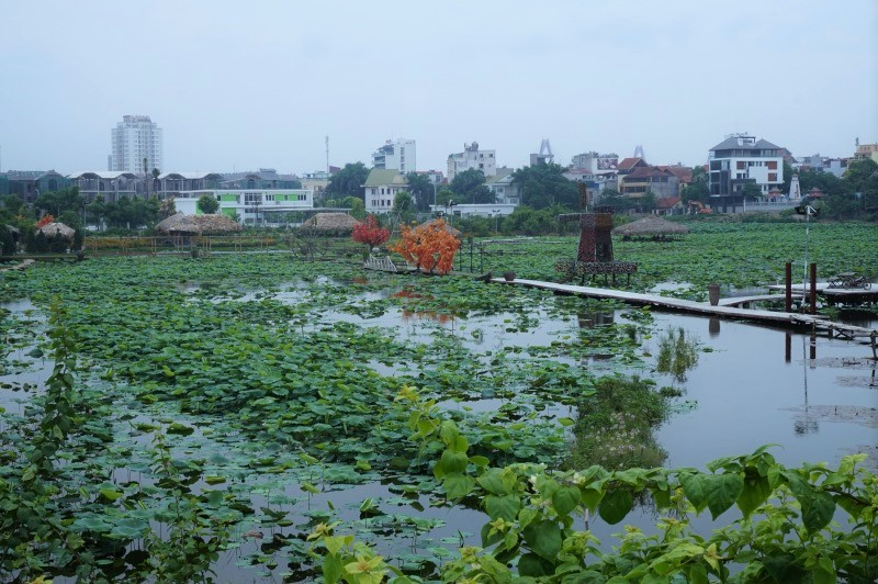 タイ湖蓮池