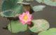 今が見頃!ハノイで、蓮の花が見られるスポットを探してみました!